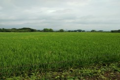 Farm Lot 4 HAs, Titled in Pampanga